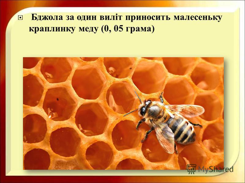 Бджола за один виліт приносить малесеньку краплинку меду (0, 05 грама )
