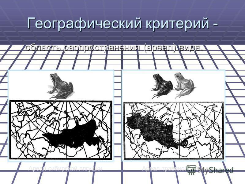 Географический критерий - область распространения (ареал) вида. Ареал сибирской лягушки Ареал травяной лягушки