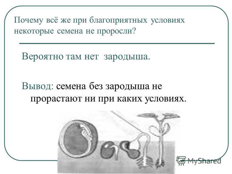 Почему всё же при благоприятных условиях некоторые семена не проросли? Вероятно там нет зародыша. Вывод: семена без зародыша не прорастают ни при каких условиях.