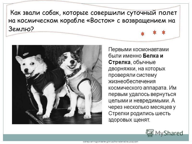 Как звали собак, которые совершили суточный полет на космическом корабле «Восток» с возвращением на Землю?.., Первыми космонавтами были именно Белка и Стрелка, обычные дворняжки, на которых проверяли систему жизнеобеспечения космического аппарата. Им