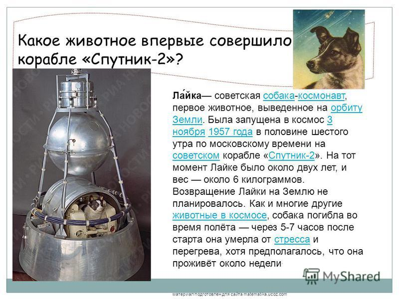 Какое животное впервые совершило полёт на корабле «Спутник-2»?, Ла́йка советская собака-космонавт, первое животное, выведенное на орбиту Земли. Была запущена в космос 3 ноября 1957 года в половине шестого утра по московскому времени на советском кора