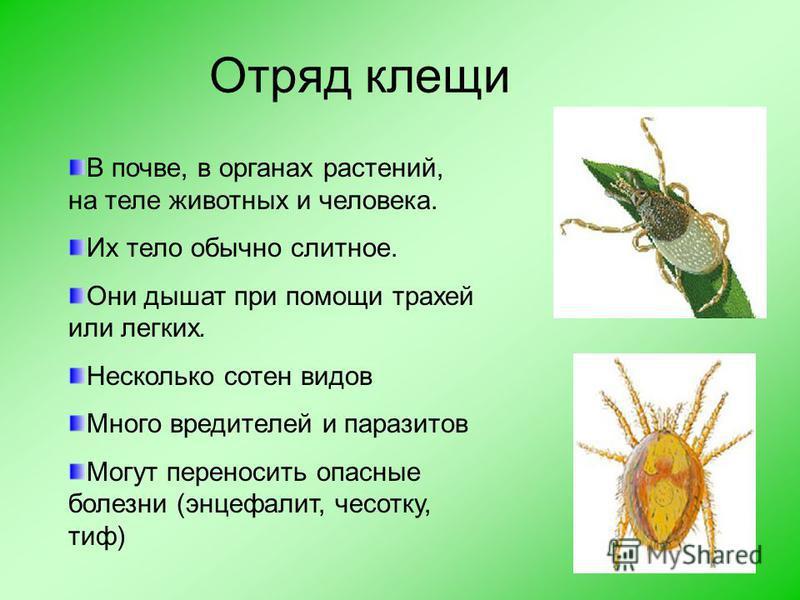 Это интересно Если паук сытый, то он добычу парализует ядом и плетет вокруг нее кокон, и она там остается живой, но не двигается. В плохую погоду он подъедает свои коконы.