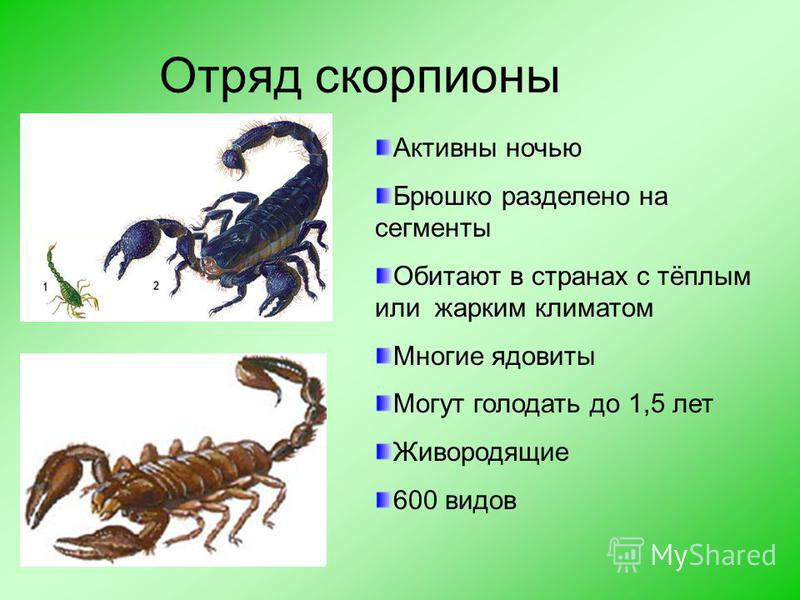 Отряд сенокосцы У сенокосцев тело короткое, овальное (0,1–2,2 см), а ноги длинные и тонкие (до 16 см), легко обламываются, сохраняя способность двигаться. Дыхание трахейное. Питаются насекомыми, моллюсками и органическими остатками. В отряде около 40