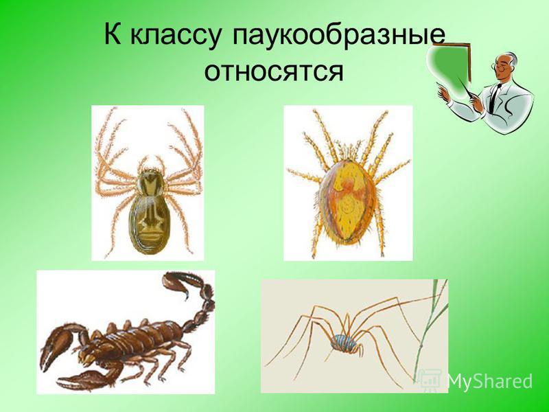 Как называется наука о пауках Арахнология