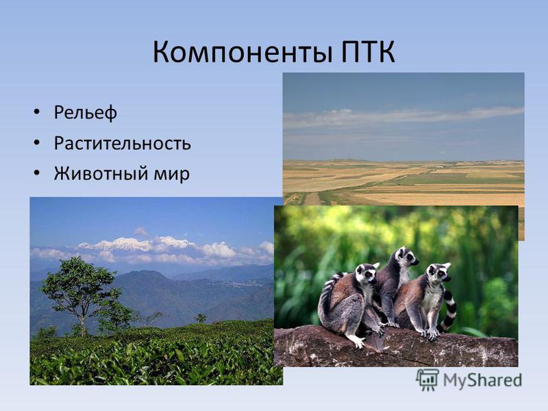 Компоненты ПТК Рельеф Растительность Животный мир