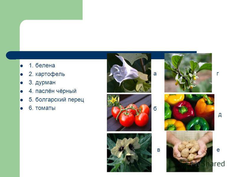 1. белена 2. картофель 3. дурман 4. паслён чёрный 5. болгарский перец 6. томаты а б в г д е