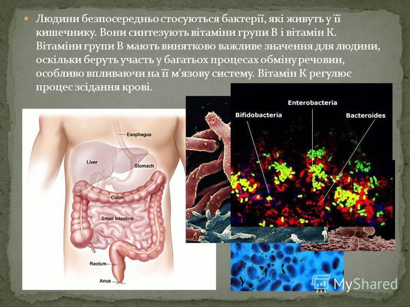 Симбіотичні бактерії Пригадайте, які бактерії називають симбіотичними. Яким чином вони пов 'язані з тваринами ?Бактерії і тварини перебувають у взаємозв'язку через процес травлення. Травоїдні тварини харчуються переважно травою, основна маса якої скл