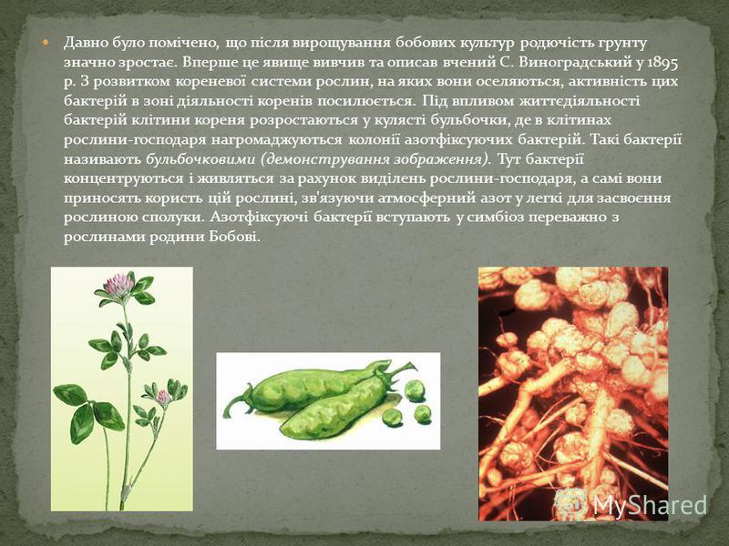 N2 Бактерії і ґрунт Розповідь з елементами бесіди. З курсу природознавства пригадайте, що таке ґрунт. Від чого залежить родючість ґрунту? Як утворюється гумус? Вам вже відомо, що родючість фунту визначається кількістю гумусу. Гумус утворюється в резу