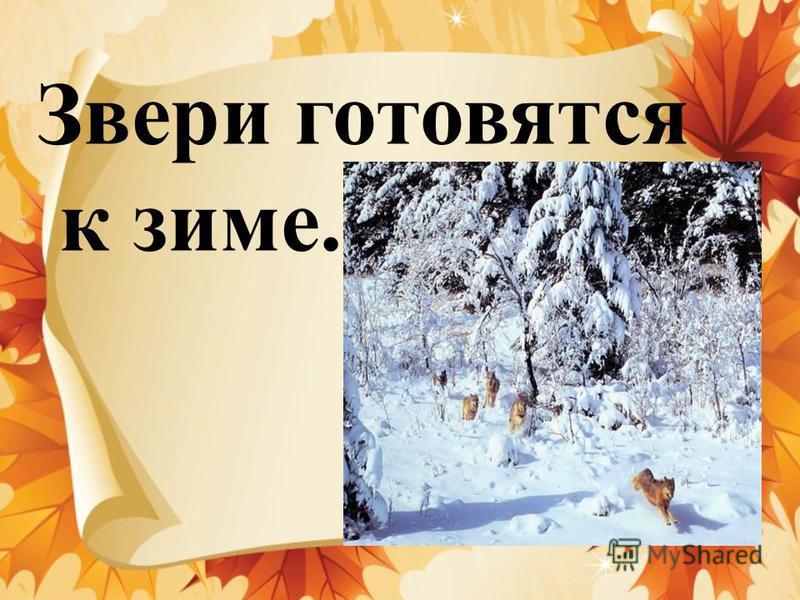 Звери готовятся к зиме.