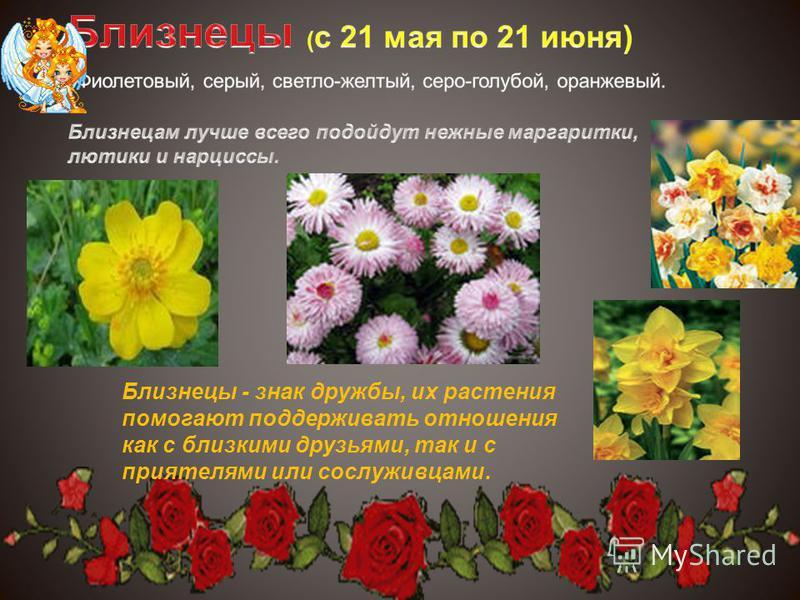Близнецы - знак дружбы, их растения помогают поддерживать отношения как с близкими друзьями, так и с приятелями или сослуживцами.
