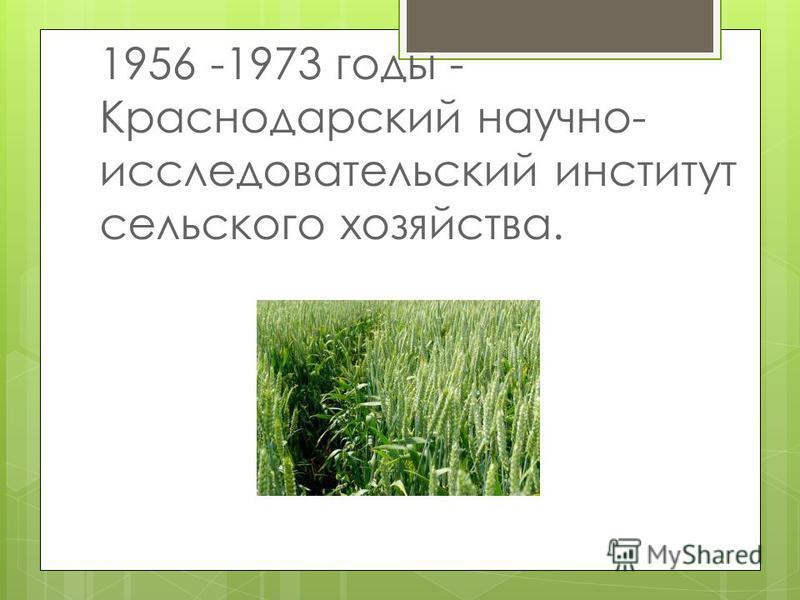 1956 -1973 годы - Краснодарский научно- исследовательский институт сельского хозяйства.