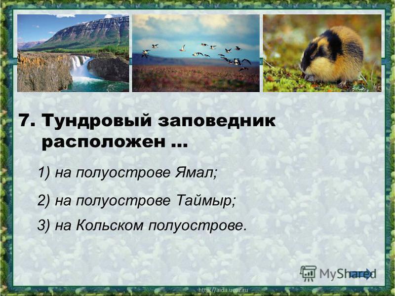 6. В тундре обитают… 1) тюлени, моржи, киты; 2) песцы, лемминги, волки; 3) верблюды, лошади, коровы.