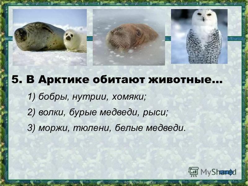 4. В ледяной зоне растут… 1) кедры, берёзы, черёмуха; 2) лишайники, мхи; 3) бузина, орешник, айва.