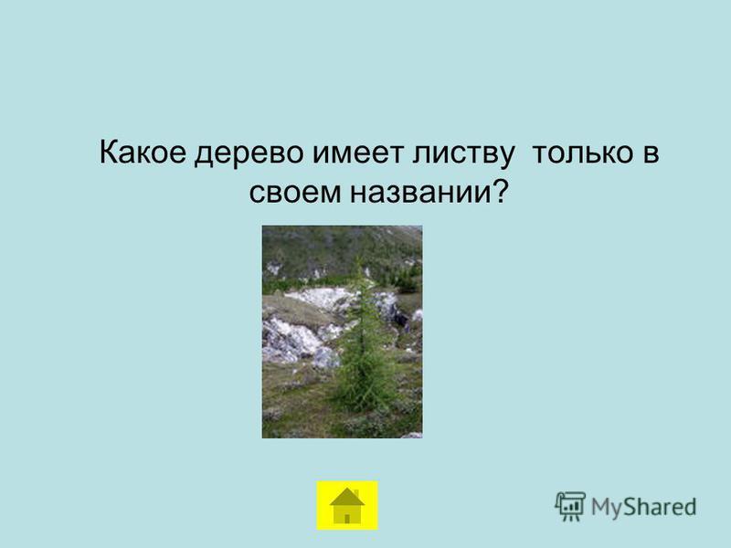 Какая порода деревьев основная лесообразующая в Челябинской области?