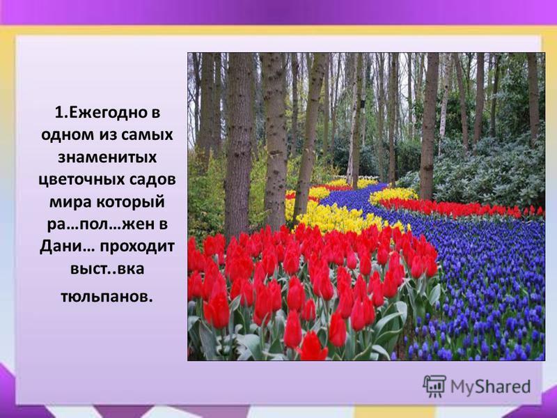 1. Ежегодно в одном из самых знаменитых цветочных садов мира который ра…пол…жен в Дани… проходит вист..века тюльпанов.