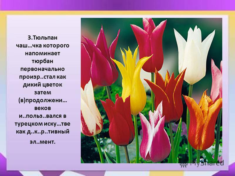 3. Тюльпан чаш…чка которого напоминает тюрбан первоначально произр..стал как дикий цветок затем (в)продолжении… веков и..польз..рвался в турецком иску…две как д..к..р..дивный эл..мент.