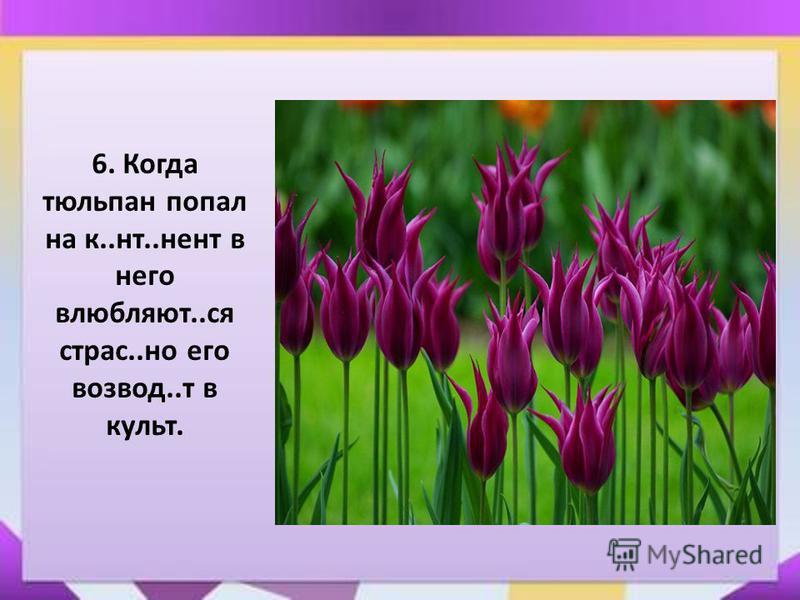 6. Когда тюльпан попал на к..нт..нет в него влюбляют..ся страз..но его взвод..т в культ.