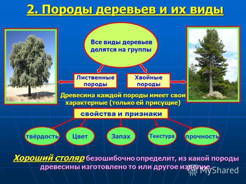 Лиственные породы Хвойные породы 2. Породы деревьев и их виды Все виды деревьев делятся на группы Древесина каждой породы имеет свои характерные (только ей присущие) свойства и признаки Цвет Запах Текстура прочность твёрдость Хороший столяр безошибоч