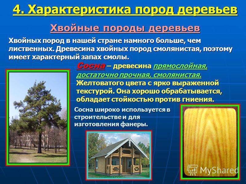 Хвойные породы деревьев Хвойных пород в нашей стране намного больше, чем лиственных. Древесина хвойных пород смолянистая, поэтому имеет характерный запах смолы. Сосна – древесина прямослойная, достаточно прочная, смолянистая. Желтоватого цвета с ярко