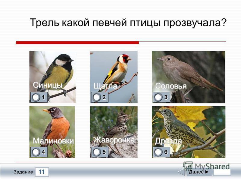 Прослушайте пение одной из птиц, представленных на фотографиях Далее