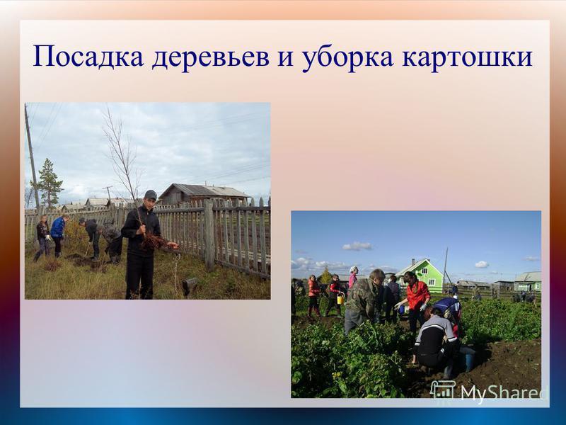 Посадка деревьев и уборка картошки