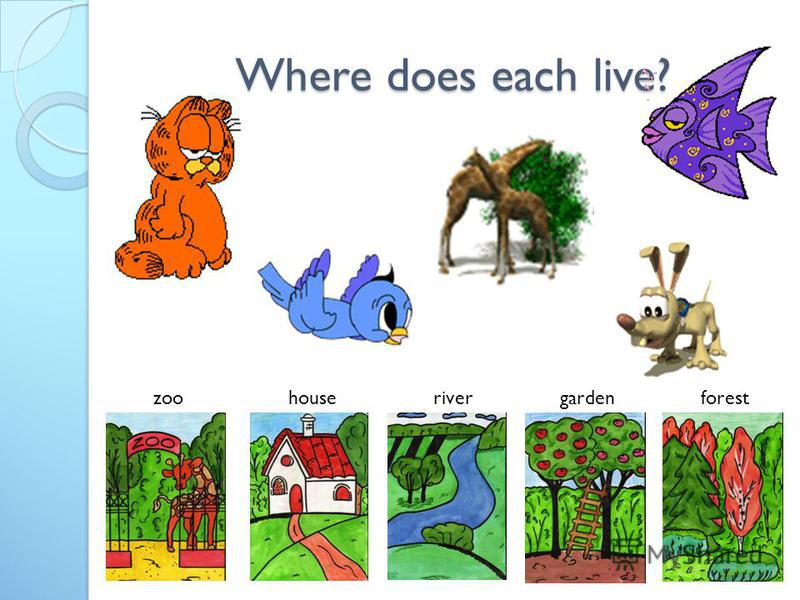 Where does each live? zoohouserivergardenforest