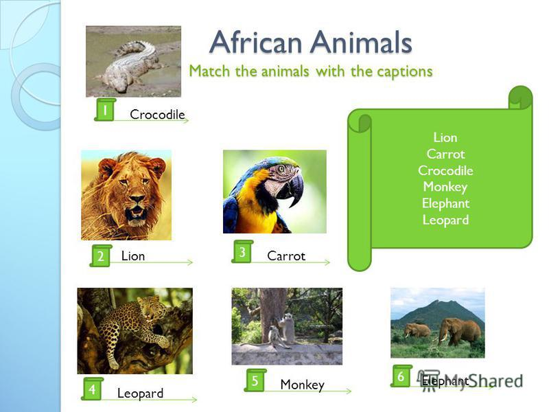 African Animals Match the animals with the captions Lion Carrot Crocodile Monkey Elephant Leopard 2 1 4 5 6 3 Crocodile LionCarrot Leopard Monkey Elephant