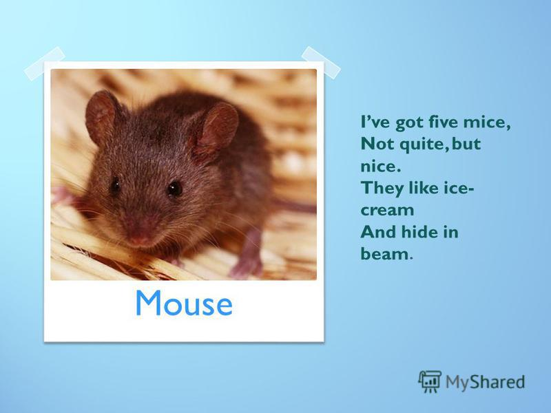 Ive got five mice, Not quite, but nice. They like ice- cream And hide in beam. Mouse