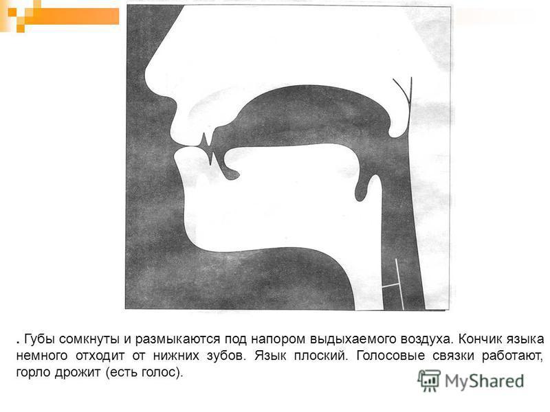 . Губы сомкнуты и размыкаются под напором выдыхаемого воздуха. Кончик языка немного отходит от нижних зубов. Язык плоский. Голосовые связки работают, горло дрожит (есть голос).
