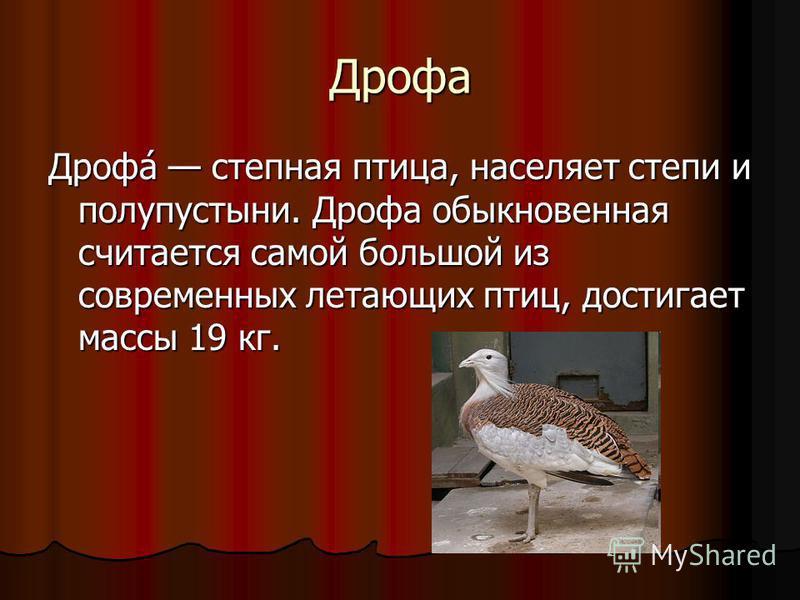 Дрофа Дрофа́ степная птица, населяет степи и полупустыни. Дрофа обыкновенная считается самой большой из современных летающих птиц, достигает массы 19 кг.
