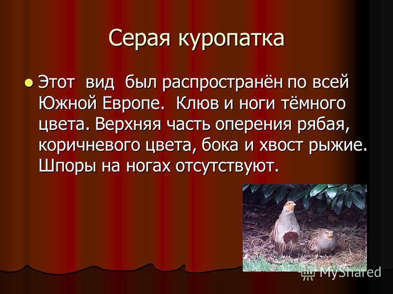 Серая куропатка Этот вид был распространён по всей Южной Европе. Клюв и ноги тёмного цвета. Верхняя часть оперения рябая, коричневого цвета, бока и хвост рыжие. Шпоры на ногах отсутствуют. Этот вид был распространён по всей Южной Европе. Клюв и ноги