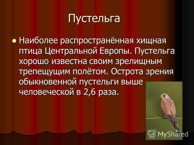 Пустельга Наиболее распространённая хищная птица Центральной Европы. Пустельга хорошо известна своим зрелищным трепещущим полётом. Острота зрения обыкновенной пустельги выше человеческой в 2,6 раза. Наиболее распространённая хищная птица Центральной
