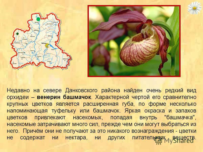 Ветреница - травянистое растение семейства лютиковых с желтыми, белыми или розоватыми цветками, цветущее обычно ранней весной. Около 150 видов, по всему земному шару. Растут на альпийских и субальпийских лугах, некоторые - типично лесные. Многие куль