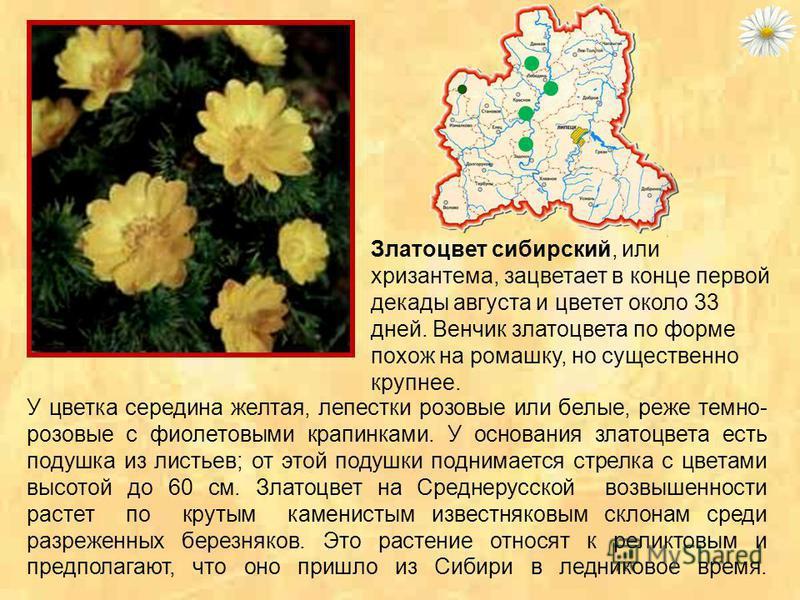 Дикий миндаль - насчитывает около 40 видов. Листопадные кустарники, иногда небольшие деревца с очередными, простыми, ланцетными листьями, пильчатьми по краю; с обильными и очень красивыми, крупными, одиночными, розовыми или белыми цветками.