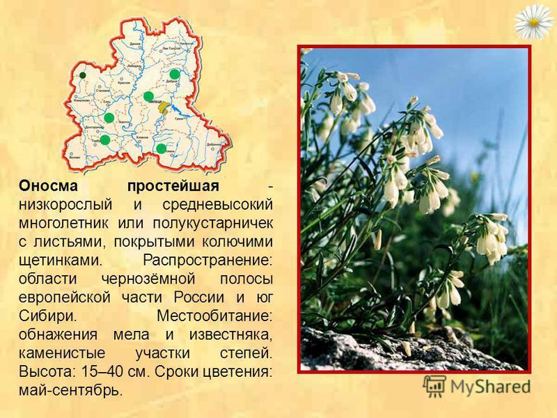 Лапчатка донская - степное реликтовое растение с темно-зелеными перистыми листьями и ярко- золотистыми цветами, по форме похожими на цветы маленькой розы. Высота растения - 25-30 см. Цветет лапчатка в конце мая – начале июня около 30 дней. Растет на