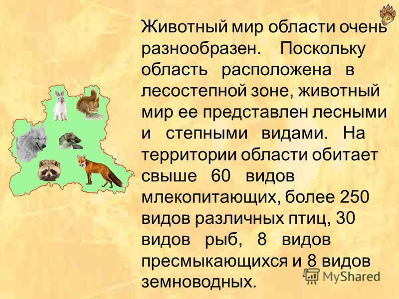 Шлемник альпийский - растет на меловых и известняковых склонах Среднерусской возвышенности. Цветет в конце мая - начале июня, средняя длительность цветения - 23 дня. Растет шлемник в субальпийском и альпийском поясах на каменистых породах Альп. Урала