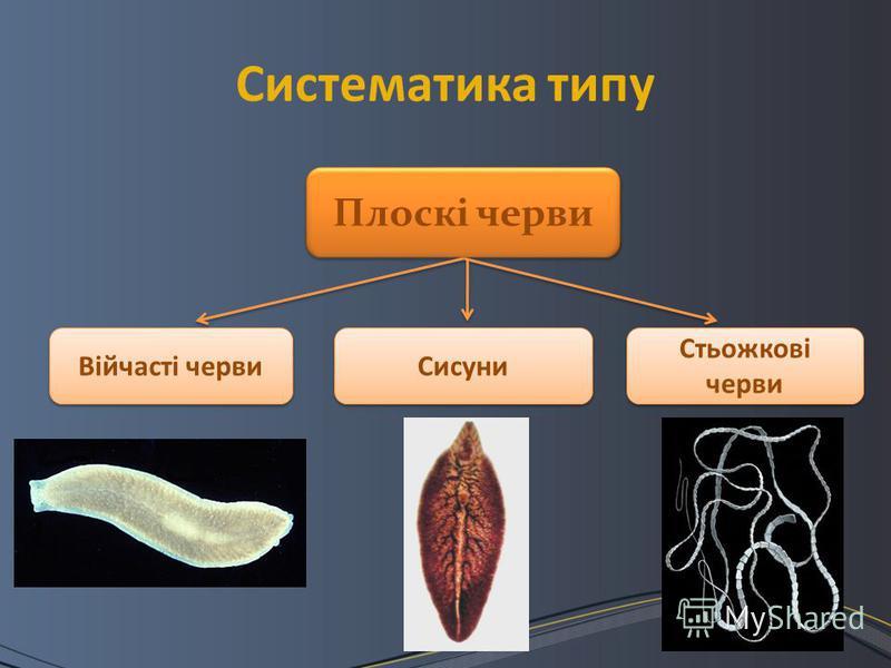 Систематика типу Плоскі черви Війчасті черви Сисуни Стьожкові черви