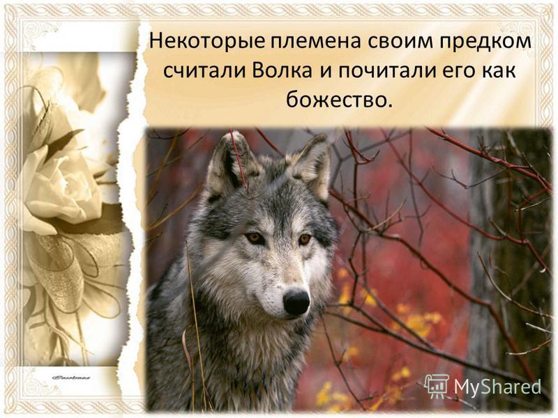 Некоторые племена своим предком считали Волка и почитали его как божество.