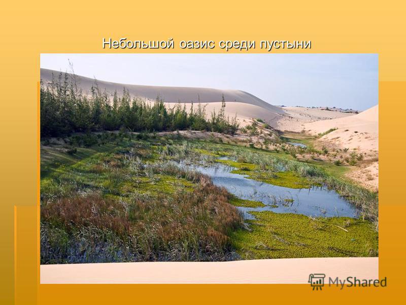 Небольшой оазис среди пустыни