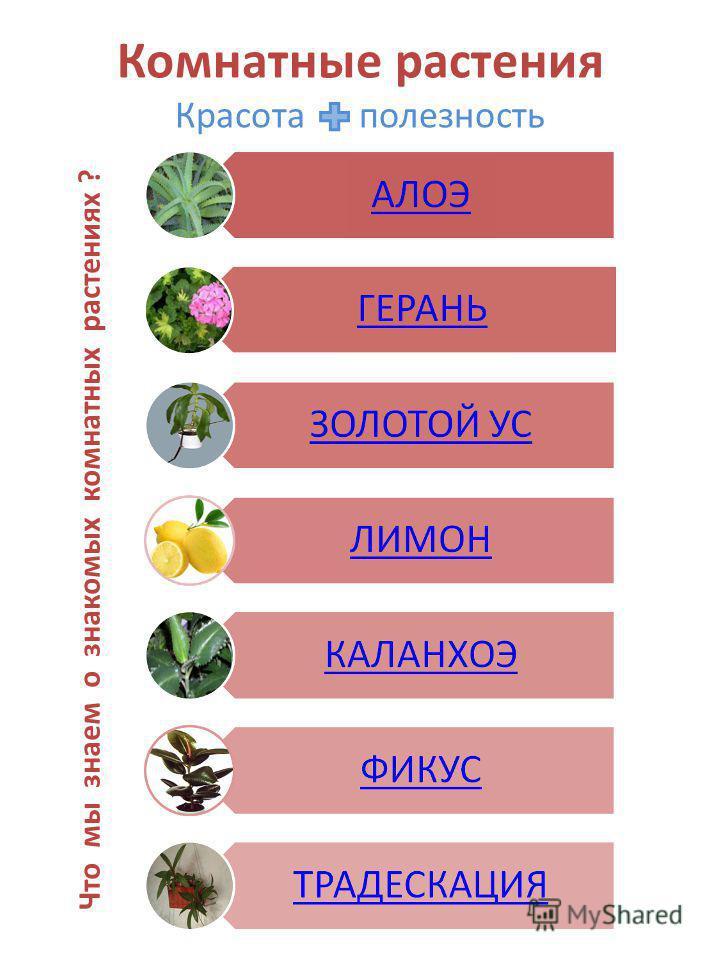 Комнатные растения Красота + полезность Что мы знаем о знакомых комнатных растениях ?