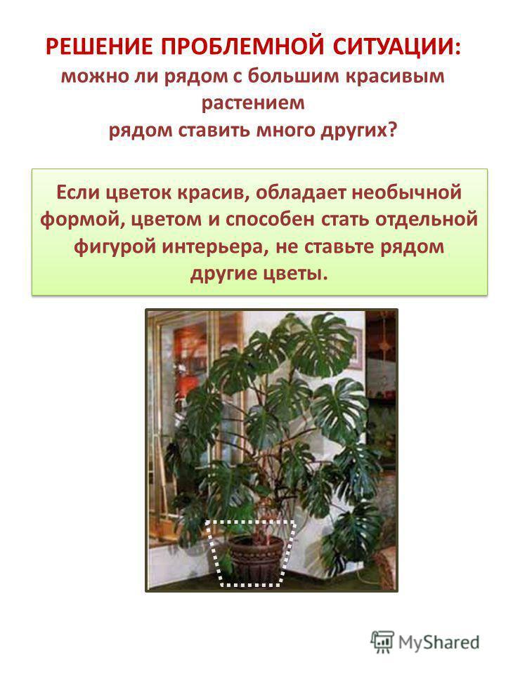 Если цветок красив, обладает необычной формой, цветом и способен стать отдельной фигурой интерьера, не ставьте рядом другие цветы. РЕШЕНИЕ ПРОБЛЕМНОЙ СИТУАЦИИ: можно ли рядом с большим красивым растением рядом ставить много других?