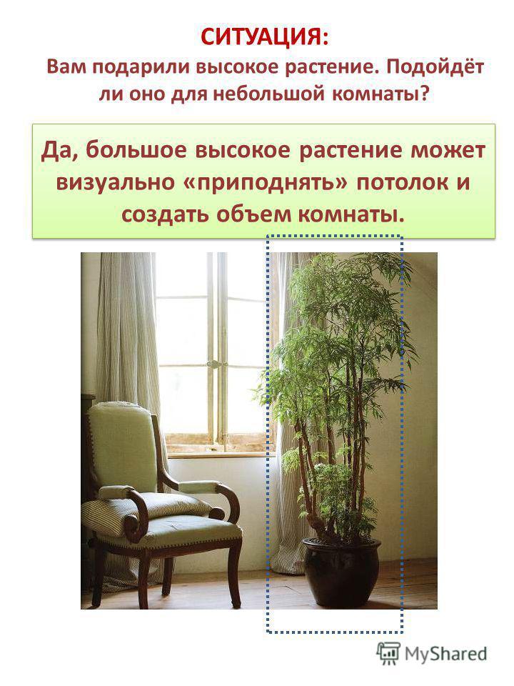 Да, большое высокое растение может визуально «приподнять» потолок и создать объем комнаты. СИТУАЦИЯ: Вам подарили высокое растение. Подойдёт ли оно для небольшой комнаты?