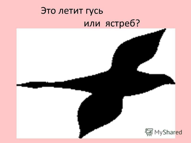 Это летит гусь или ястреб?