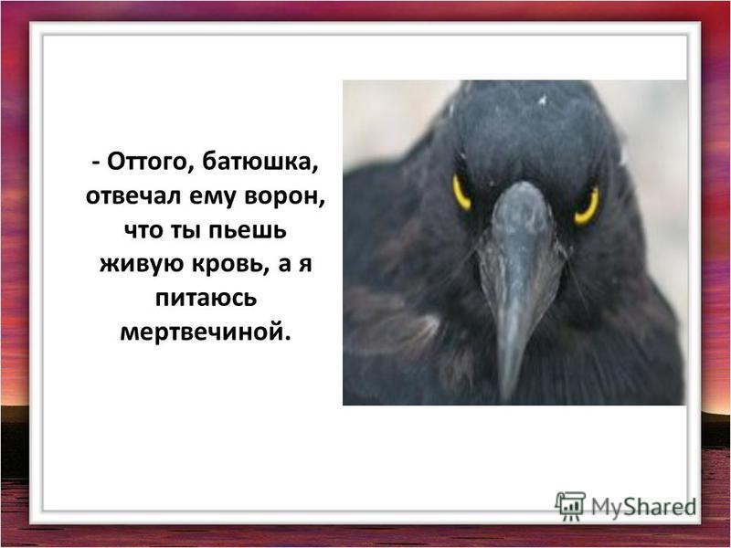 - Оттого, батюшка, отвечал ему ворон, что ты пьешь живую кровь, а я питаюсь мертвечиной.