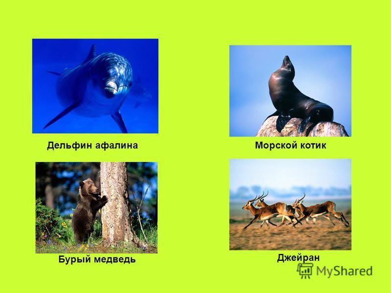 Дельфин афалина Морской котик Бурый медведь Джейран