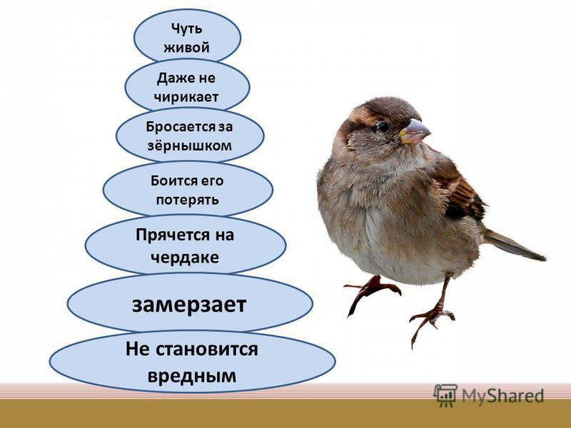 Чуть живой Даже не чирикает Бросается за зёрнышком Боится его потерять Прячется на чердаке замерзает Не становится вредным