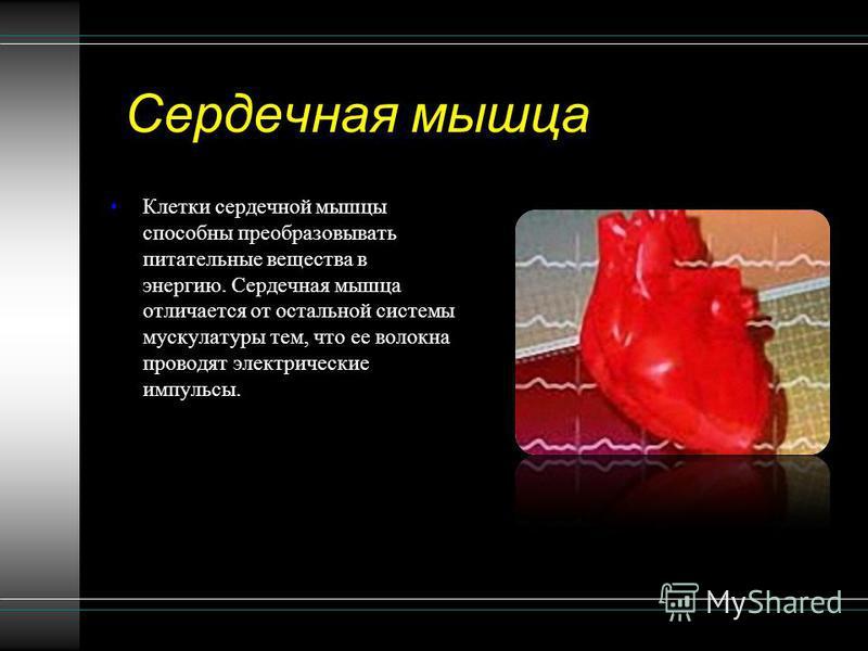 Сердечная мышца Клетки сердечной мышцы способны преобразовывать питательные вещества в энергию. Сердечная мышца отличается от остальной системы мускулатуры тем, что ее волокна проводят электрические импульсы.