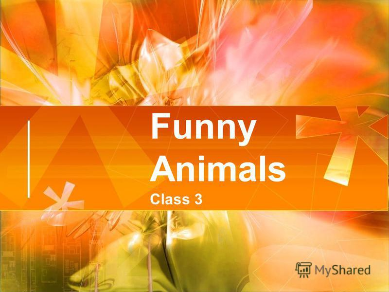 Funny Animals Class 3