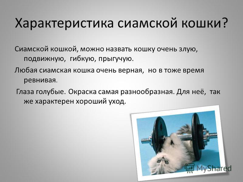 Характеристика сиамской кошки? Сиамской кошкой, можно назвать кошку очень злую, подвижную, гибкую, прыгучую. Любая сиамская кошка очень верная, но в тоже время ревнивая. Глаза голубые. Окраска самая разнообразная. Для неё, так же характерен хороший у