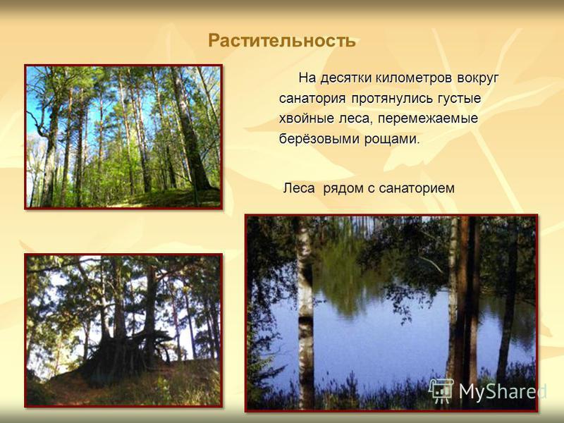 Растительность На десятки километров вокруг На десятки километров вокруг санатория протянулись густые хвойные леса, перемежаемые берёзовыми рощами. Леса рядом с санаторием
